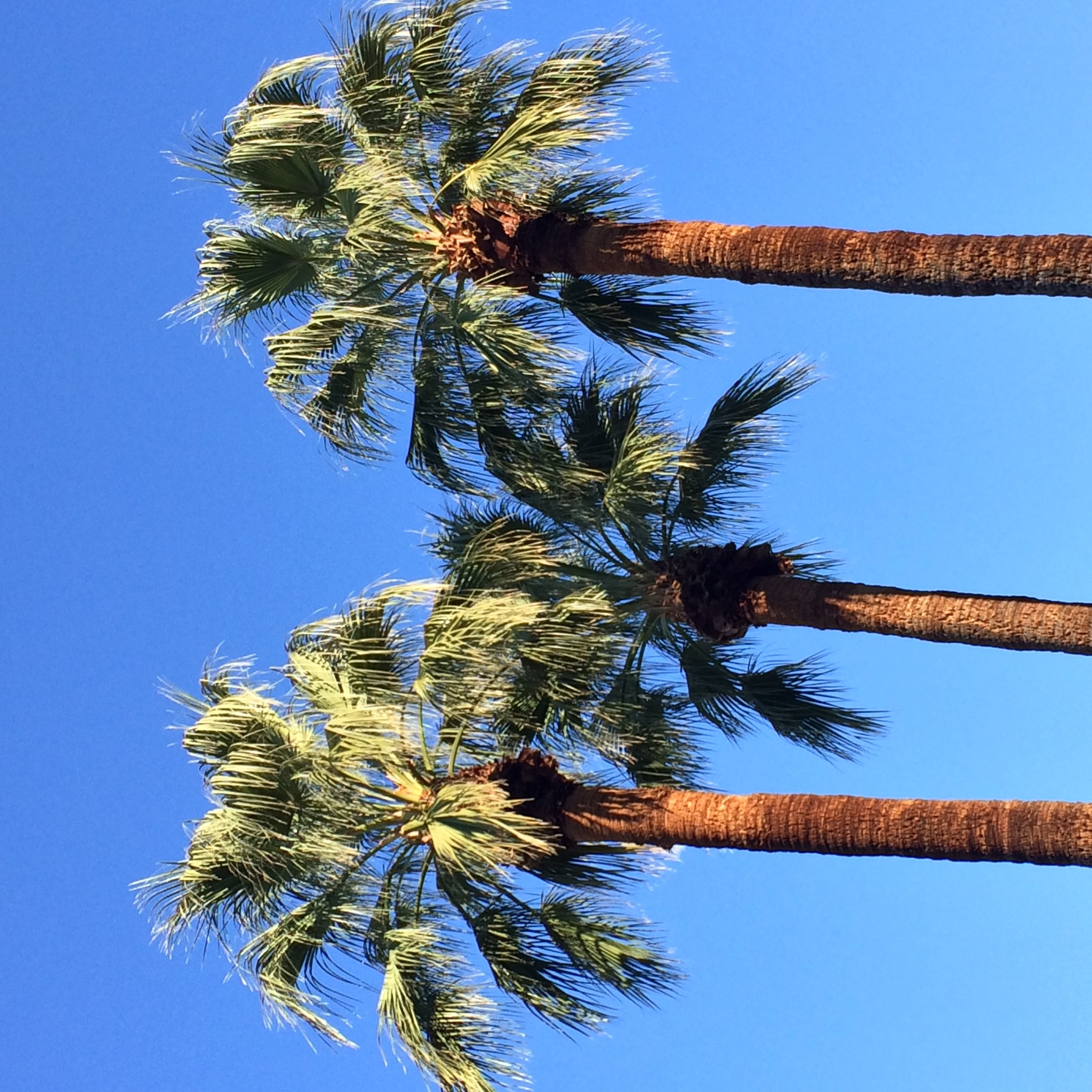 Travel guide palm springs california for Travel to palm springs